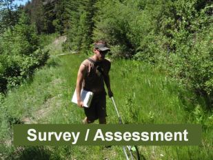 Survey and assessments